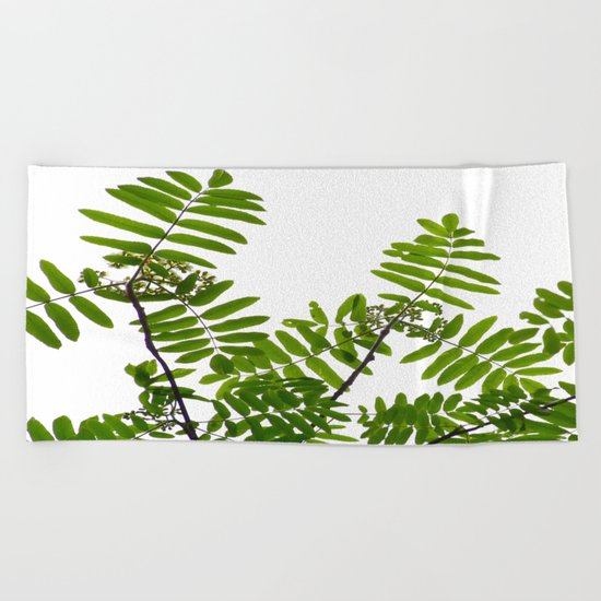 New Green Leaves Of A Rowan  Beach Towel