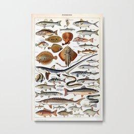 Adolphe Millot - Poissons B - French vintage nautical poster Metal Print