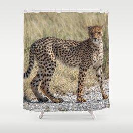 Cheetah Cub 4 Shower Curtain