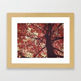 color of the season Framed Art Print