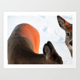 White Tail Deer (3 of 3) - SUNKISSED Art Print