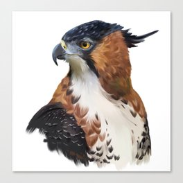 Hawk Eagle Canvas Print