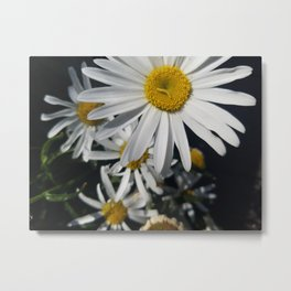 Caterpillar on White Daisy Metal Print