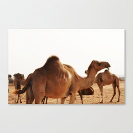 Meeting Canvas Print