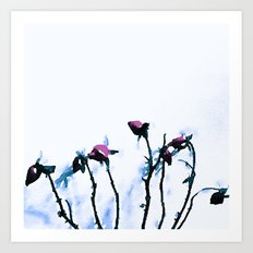 Winter Rose Art Print