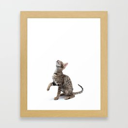 Cute Kitty Framed Art Print