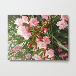Pink Flowers in Toscolano Maderno Metal Print