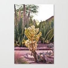 Desert Botanical Gardens  Canvas Print