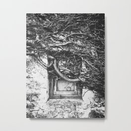 Window with Roots Metal Print