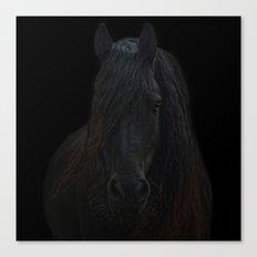 Frisian Stallion Canvas Print