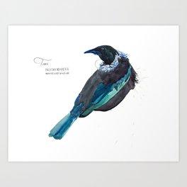 Tui watercolor Art Print