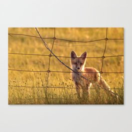 Red Fox Kit looking through fence Canvas Print