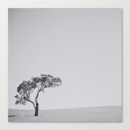 This little tree Canvas Print