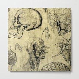 Vintage Human Anatomy Skulls Metal Print
