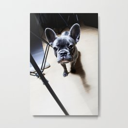 French Bulldog at a photo shoot Metal Print