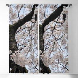 Sakura Blooming (Japan) Blackout Curtain