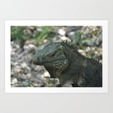 Close Up Iguana Art Print
