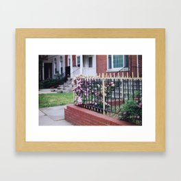 Pink Roses Growing Through Iron Fence Film Photograph Soft Abstract Feminine Wall Art Framed Art Print