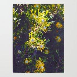 Australian Spring Poster