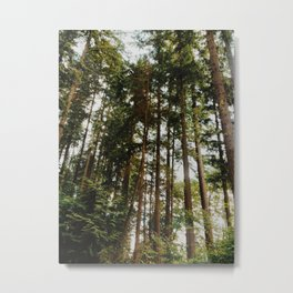 North Vancouver Forest Metal Print