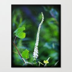 White Flowers In The Field Canvas Print