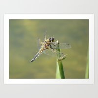 dragonfly Art Prints featuring Dragonfly  by Factory23