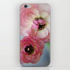 Pink Ranunculus Flower iPhone & iPod Skin