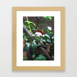 Santa Frog Framed Art Print