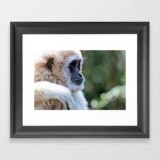 Gibbon Framed Art Print
