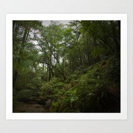 cataract trail after the rain Art Print