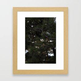 Cherry Blossoms & Pine Trees Framed Art Print