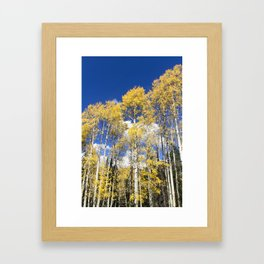 Colorado Aspens Framed Art Print