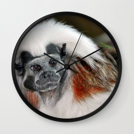 Cotton-top Tamarin Wall Clock