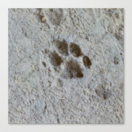 Cat Paw Canvas Print