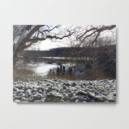 Arboretum In Winter Metal Print