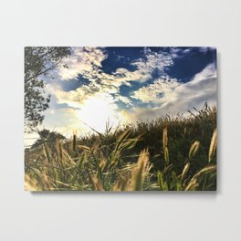 Wild Wheat Metal Print