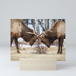 ELK IN RUT COLORADO ROCKY MOUNTAIN NATIONAL PARK WILDLIFE NATURE PHOTOGRAPHY Mini Art Print