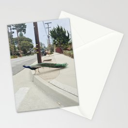 PV Peacock Stationery Cards