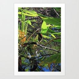 A Green Heron in Corkscrew-vertical Art Print