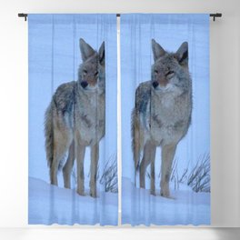 Watercolor Coyote 03, Snowy Prairie Coyote Blackout Curtain