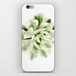 Echeveria imbricata variegata iPhone Skin