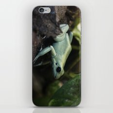 Mint Terribilis Poison Dart Frog iPhone & iPod Skin