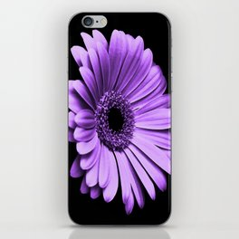Purple Chrysanthemum iPhone Skin