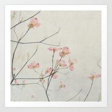 Pink Dogwood Flower Botanical Art Print