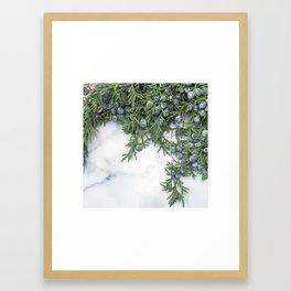 Juniper Berries Framed Art Print