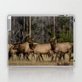 Elk Herd Laptop & iPad Skin