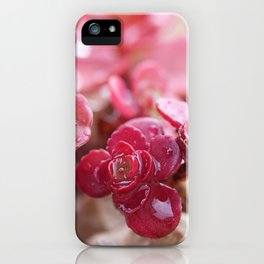Succulent Garden Cactus Red Flowers Tropical Cacti with drops iPhone Case