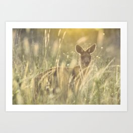 Sneaky Kangaroo in the Evening Sunset Art Print