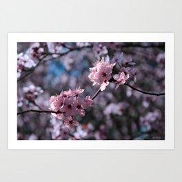 FLOWERING PLUM 2 Art Print