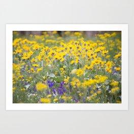 Meadow Gold - Wildflowers in a Mountain Meadow Art Print